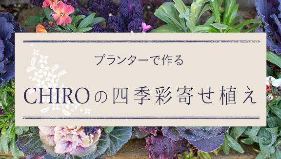 プランターで作る「CHIROの四季彩寄せ植え」