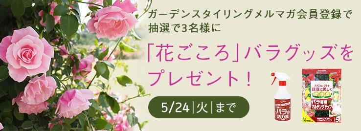 ガーデンスタイリングメルマガ会員登録で、抽選で3名様に「花ごころ」バラグッズをプレゼント!5/24 火 まで