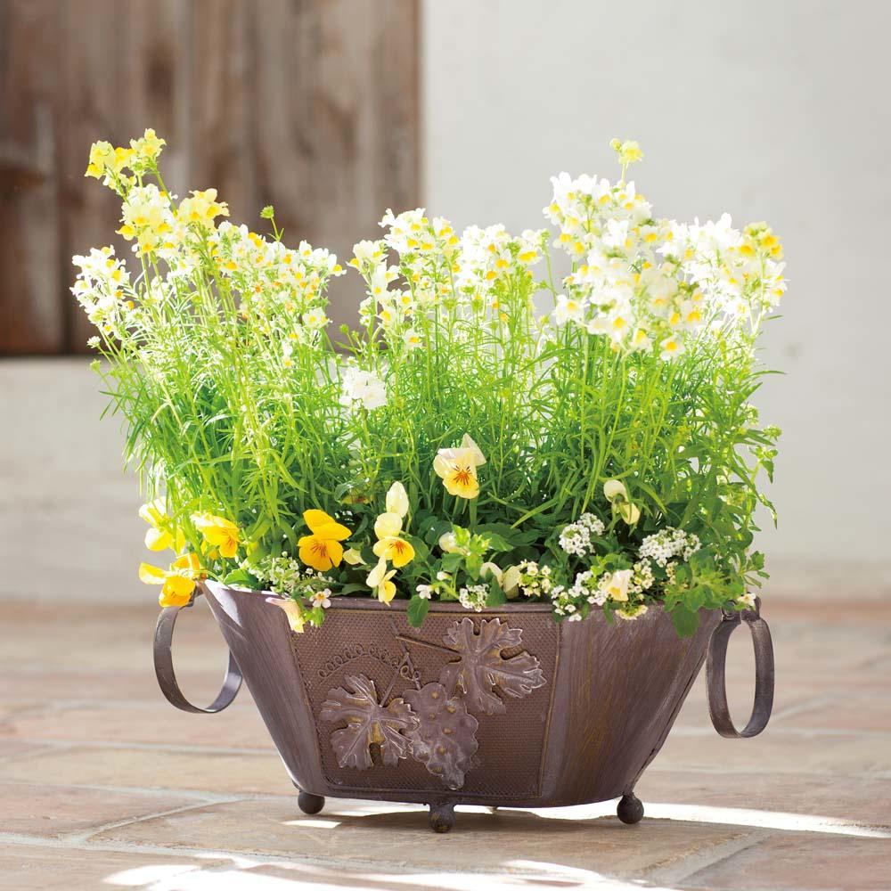 夏を乗り切る!元気な夏の寄せ植え - 寄せ植え|プランターで ...