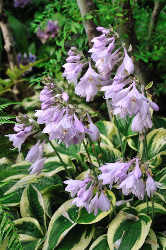 青い バラ 花 言葉 バラの花言葉、花ことば、バラの色別花言葉...