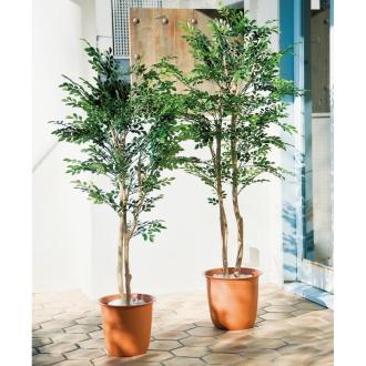 高さ180cm(人工観葉植物シマトネリコ)