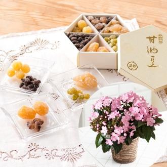【2017年 敬老の日ギフト】 銀座鈴屋「華やぎ甘納豆」&においざくら鉢植えセット